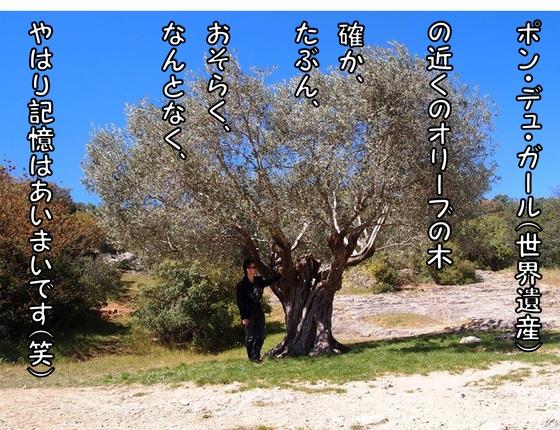 オリーブの木.jpg