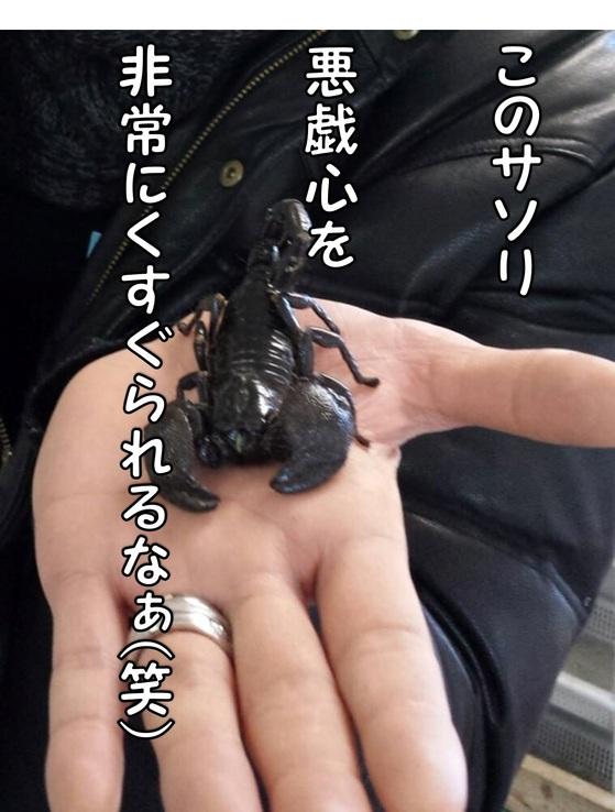 サソリ.jpg