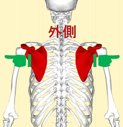 肩甲骨1.jpg