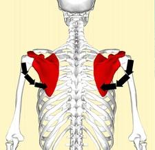 肩甲骨4.jpg