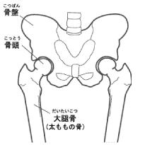 bone2_01a.png